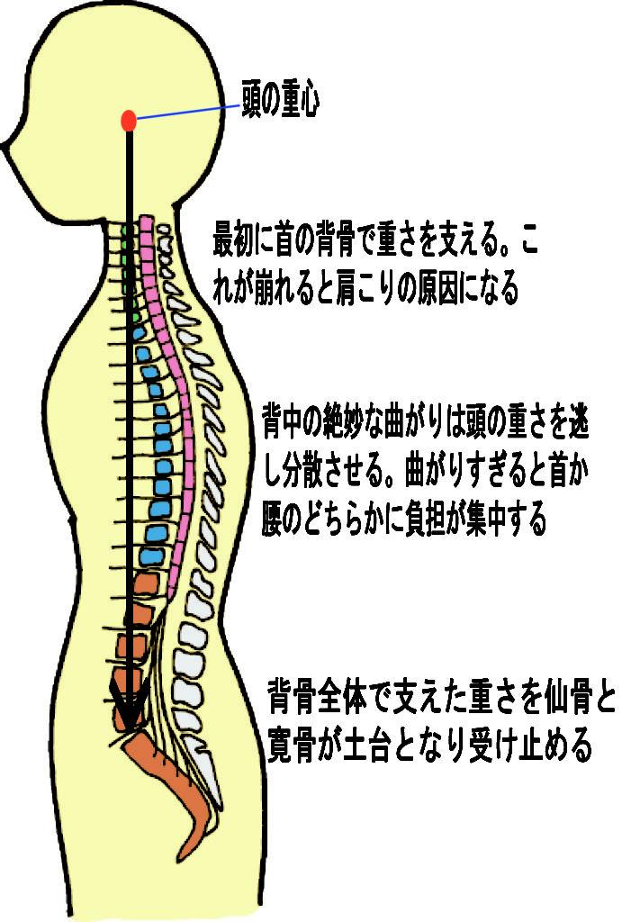 頭の重心と背骨のイラスト|東海通