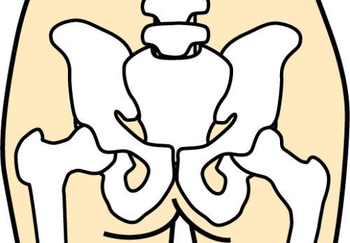 骨盤のイラスト|名古屋