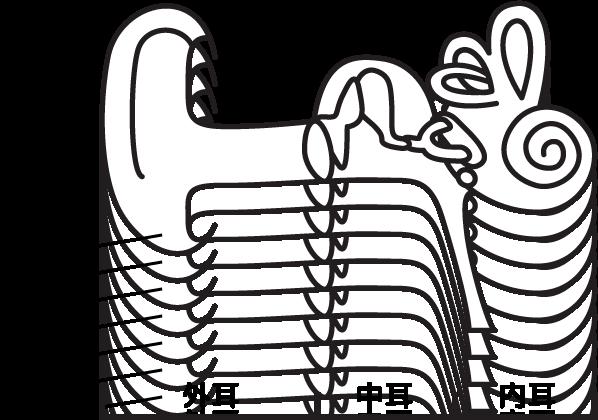 耳管のイラスト