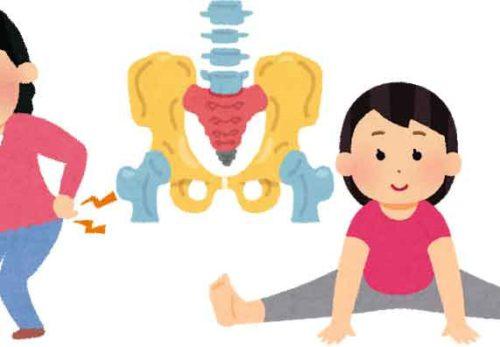腰部-骨盤-股関節のイラスト|名古屋