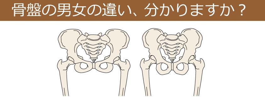 骨盤の男女の違い|名古屋